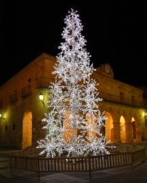 Mañana viernes se volverán a poner a la venta los árboles de Navidad del Ayuntamiento