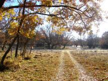 El Ayuntamiento de Soria pone a disposición aprovechamientos de leña del Monte Valonsadero procedente de cortas controladas