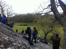 Imagen de los novillos en la pradera de Valonsadero.