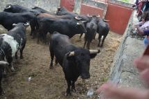 Imagen de los toros en los corrales.